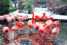 В зоопарке Праги увеличат стоимость входного билета
